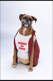 big dog redneck pet costume the top pet costumes for halloween