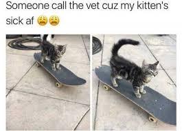 Kittens Memes - dopl3r com memes someone call the vet cuz my kittens sick af
