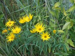 native ontario plants making a wildflower meadow u2013 beaux arbres plantes indigénes