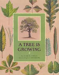 thanksgiving is by gail gibbons a tree is growing by arthur dorros scholastic