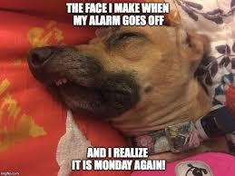 Monday Meme - happy monday meme funny it s monday pics and images