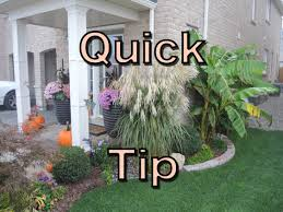 ornamental grass care easy clean up