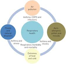 climate change and respiratory diseases european respiratory society