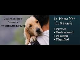 pet euthanasia in home pet euthanasia what to expect