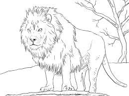 sketsa gambar binatang buas terbaru gambarcoloring