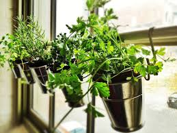 the indoor herb garden slice blog