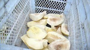cuisiner le fruit de l arbre à arbre à argoul