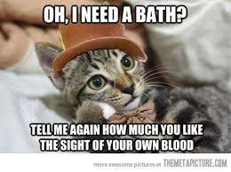 Kitty Cat Memes - kitty needs a bath the meta picture