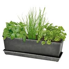 indoor outdoor herb grow kit smith u0026 hawken target