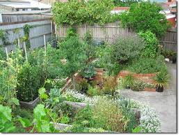 Lessons From An Urban Back Yard Food Forest Experiment The - Backyard permaculture design