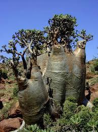 155 best strange and wonderful trees images on nature