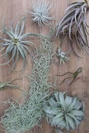Plants Indoor by 132 Best Indoor Plants Images On Pinterest Indoor Plants