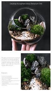 desktop ecosphere moss terrarium orb apollobox