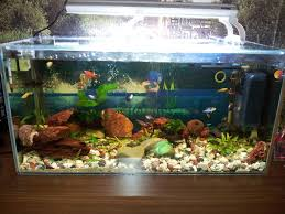 a new picture of my tropical fish tank fish