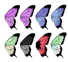 draw animals butterflies anatomy wing patterns