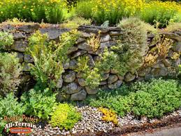 Water Rock Garden Stepables Plants That Tolerate Foot Traffic