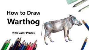 halo warthog drawing how to draw a warthog with color pencils time lapse youtube