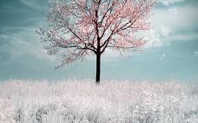 winter silence winter snow white sky pretty tree nature