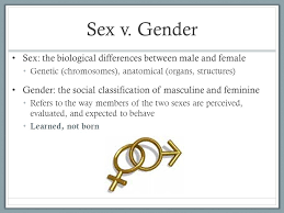 Anatomy Difference Between Male And Female Gender Ppt Download