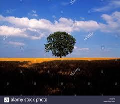 100 christmas tree saplings for sale ireland plant a