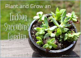 indoor succulent garden purify your air with this diy succulent