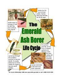 Emerald Ash Borer Map Ohio Department Of Agriculture Emerald Ash Borer