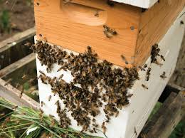 beeyard thoughts bee culture