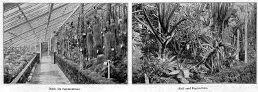 berlin garten kaufen der botanische garten zu berlin als zentralstelle f禺r koloniale