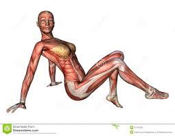 Images Female Anatomy Female Anatomy Figure Stock Photography Image 37344552