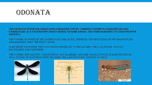 Fascinating Meaning by Insect Taxnomic Diversity Ppt Download