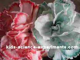 kids color colour a flower science experiments u003d