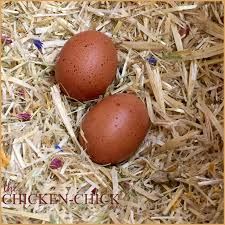 8 tips for clean eggs from backyard chickens backyards eggs and