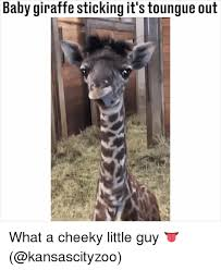 Giraffe Meme - 25 best memes about baby giraffe baby giraffe memes