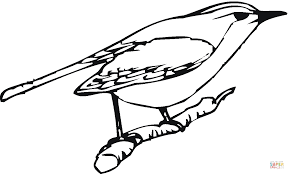 perched robin coloring page free printable coloring pages