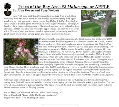 meaning of trees bay area woodturners association articles