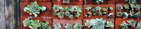 Make A Brick Succulent Planter - the wall that succulents built a creative d i y gardening