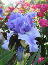 Pretty Types Of Flowers - 157 best blue flowers images on pinterest blue flowers plants