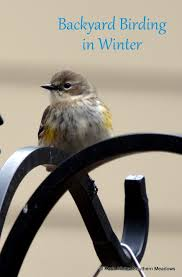Backyard Birding Magazine Southern Meadows February 2016