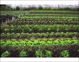 introduction to season extension in organic vegetable production