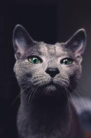 498 best cats in b u0026w photos images on pinterest cat art photo