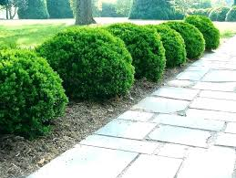 Bushes For Landscaping Landscaping Shrubs And Bushes Image Of Common Bushes For