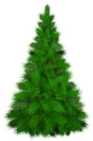 green pine tree png clip best web clipart