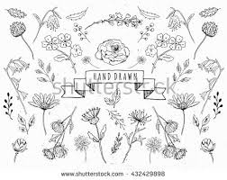 Wedding Flowers Drawing Vector Floral Set Graphic Collection Leaves Stock Vector 432429898
