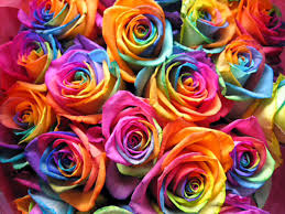 Super Colorful by 002 Flowers Mixed Colours Flowers Mixed Colours Pinterest