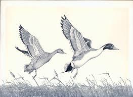 california duck stamp art program