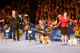 must see tv the national show presented by purina airs on