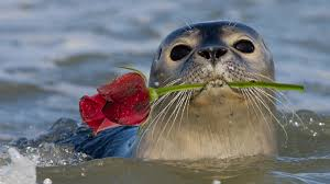 Are You Can Eat Buffet by Seals Discover Offshore Wind Farms Are All You Can Eat Seafood