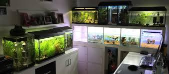 ideen kühles aquarium wohnzimmer aquarium wohnzimmer wohnung