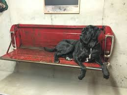 dog home decor bench tailgate bench for sale big dog ernie on ford tailgate
