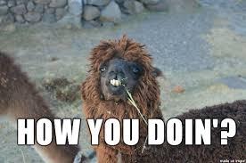 Alpaca Meme - flirting alpaca meme on imgur
